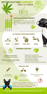 URGENCES VETERINAIRES | Dossier complet | L'intoxication Au Cannabis